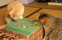 モグラたたきで遊ぶ猫