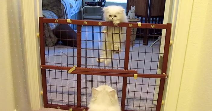 子猫に教える母猫