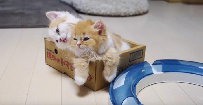 ペロペロされる子猫ちゃん