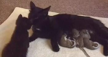 リスの赤ちゃんを育てる母猫