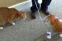猫型の風船に猫パンチ