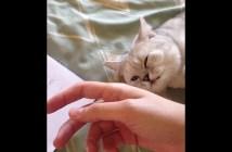 ハグする甘えん坊猫