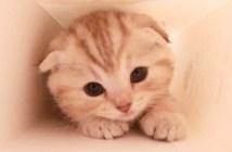 hako_cat02