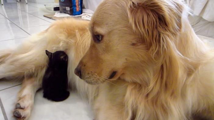 子猫を見つける大型犬
