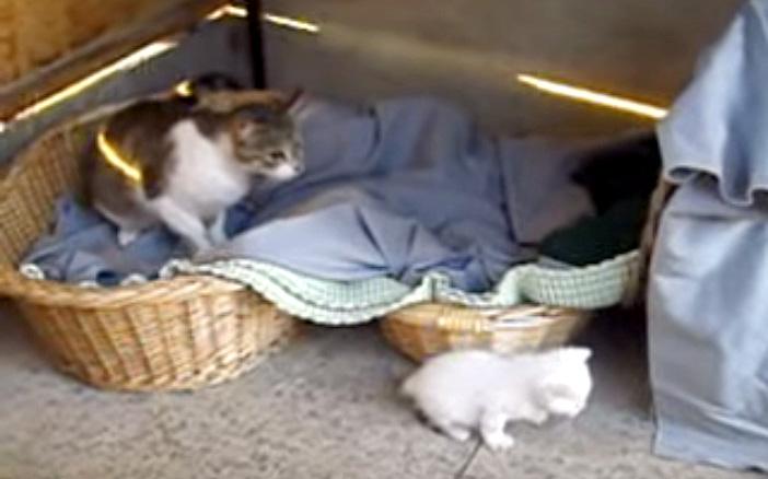 子猫を見守る母猫