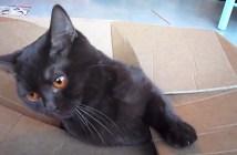 suikomare_cat