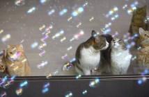 シャボン玉に目を輝かせる猫