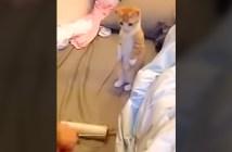 コロコロを立ち見する子猫