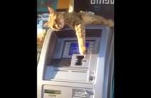 ATMを守る猫