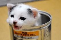 ネコ缶子猫