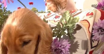 大好きな犬に花をプレゼントする猫
