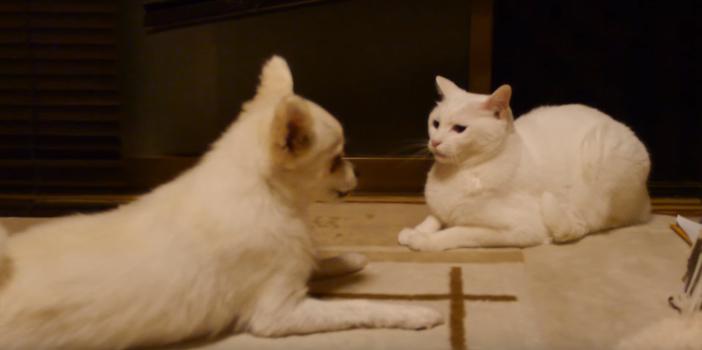 話しかけてくる犬