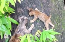 kinobori_cat
