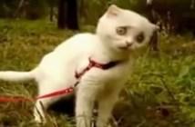 草が美味しくなかった猫の表情