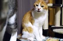 猫のお尻のニオイに顔が固まる猫