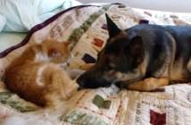 行方不明になっていた猫と再会する犬