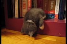 本棚の角で垂れ下がって眠る子猫