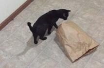 20秒で猫を捕まえる方法