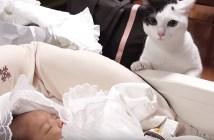 初めて赤ちゃんを見る猫