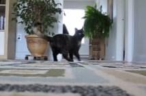 ボールをとってくる猫