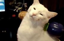電動マッサージ機の虜になった猫
