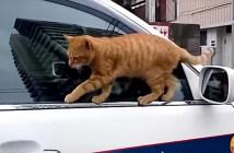かっこいいところを見せようとした猫