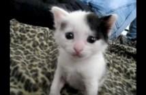 クシャミをする子猫