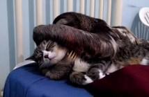 仲良しな猫のナマケモノ