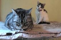 里親に出された子猫の一年間の記録
