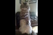 隙のない猫