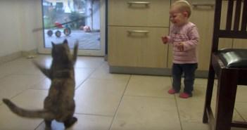 猫の動きに大爆笑する赤ちゃん