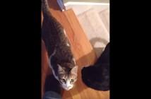 よそよそしい猫