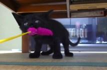 アニメのような子猫