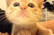 テーブルの上のご飯を狙う子猫