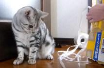 資源ゴミの日の猫