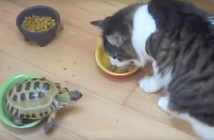 猫の食事を邪魔するカメ