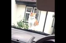 クラクションにビックリする猫