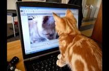 自分が映るビデオに興味津々の子猫