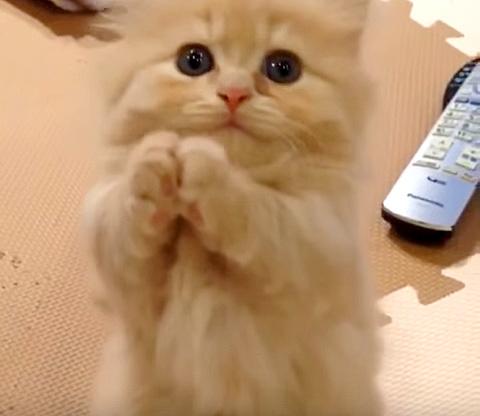 おねだり子猫