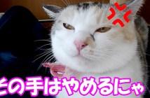 激おこぷんぷん丸な猫