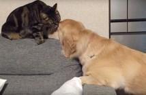 ソファーに寄りかかって猫にペロペロされる犬