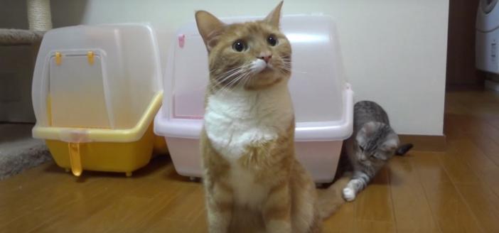 気づかれないようにシッポにタッチする猫