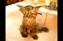 うっとり顔でシャワーを浴びる猫