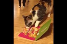メッセージカードから子猫の声が聞こえてくると