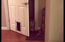 ドアを開ける器用な猫