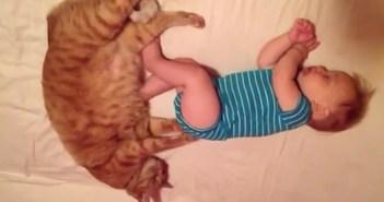 赤ちゃんのお尻をフミフミする猫