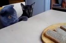 パンを盗もうとする二匹の猫