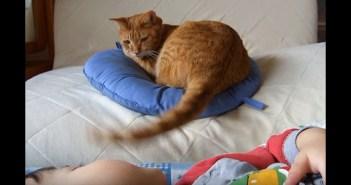 シッポであかちゃんをあやす猫