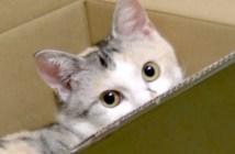 猫の熱視線