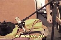歌を歌う猫